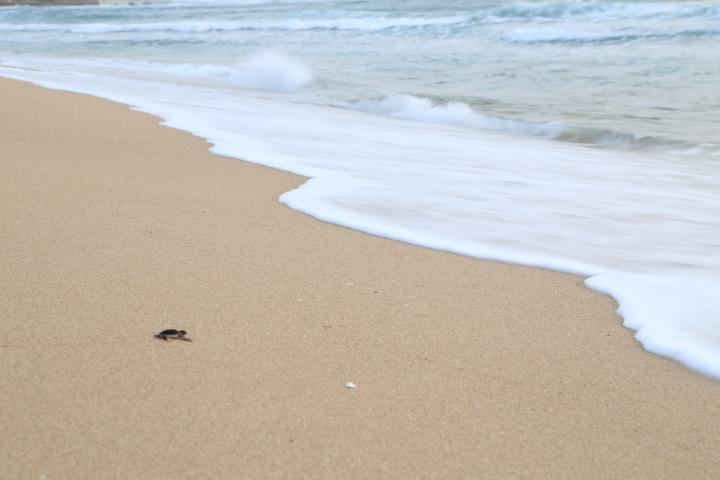 Jika dia selamat dan bertahan hidup di laut lepas, dia akan kembali 25 tahun lagi ke Pangumbahan.